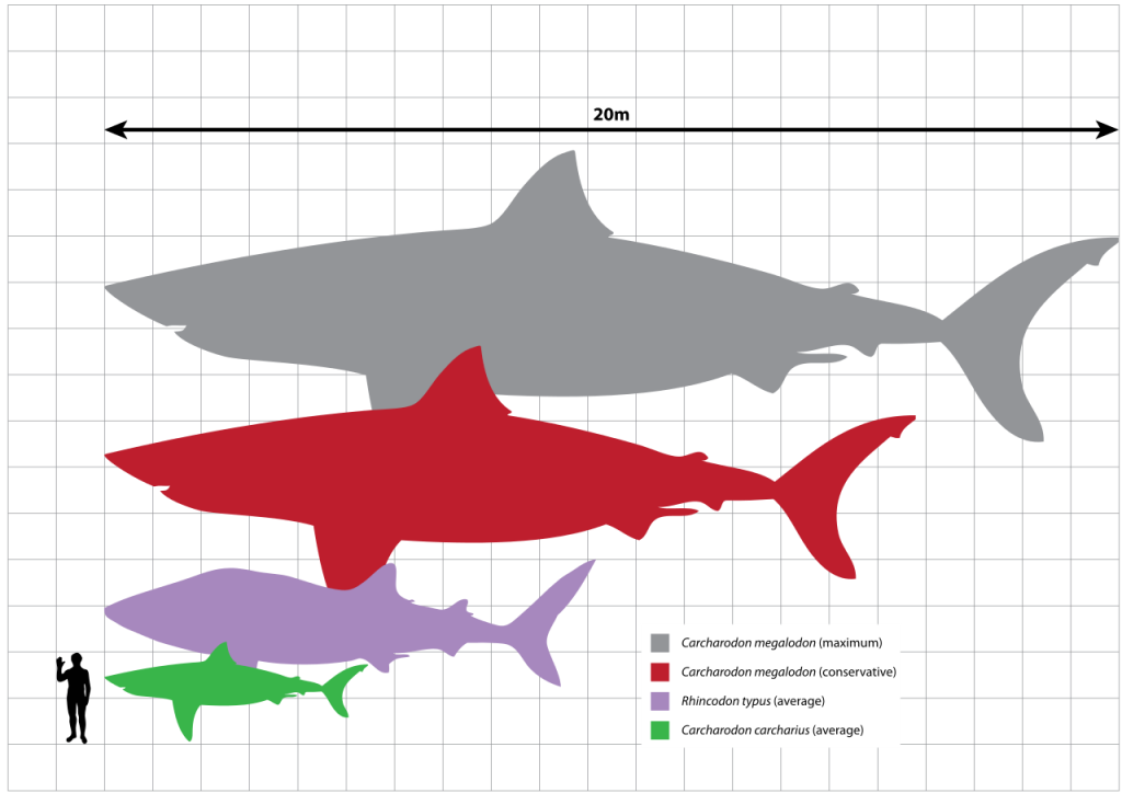 How To Draw A Shark Artzinspired